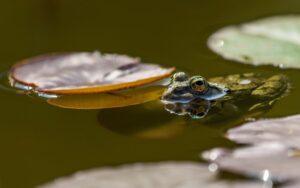 Кръстиха новооткрити жаби на бандата Led Zeppelin